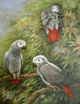 African Grey Parrots oil painting
