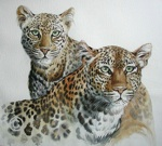 Leopards in Watercolor